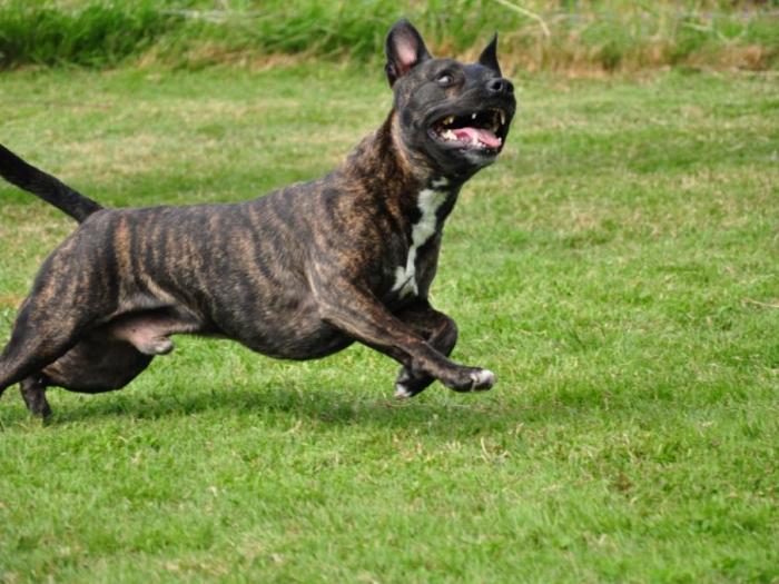 Tyson (3)