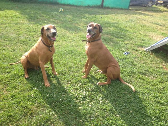 Zeco & Kavill (3)