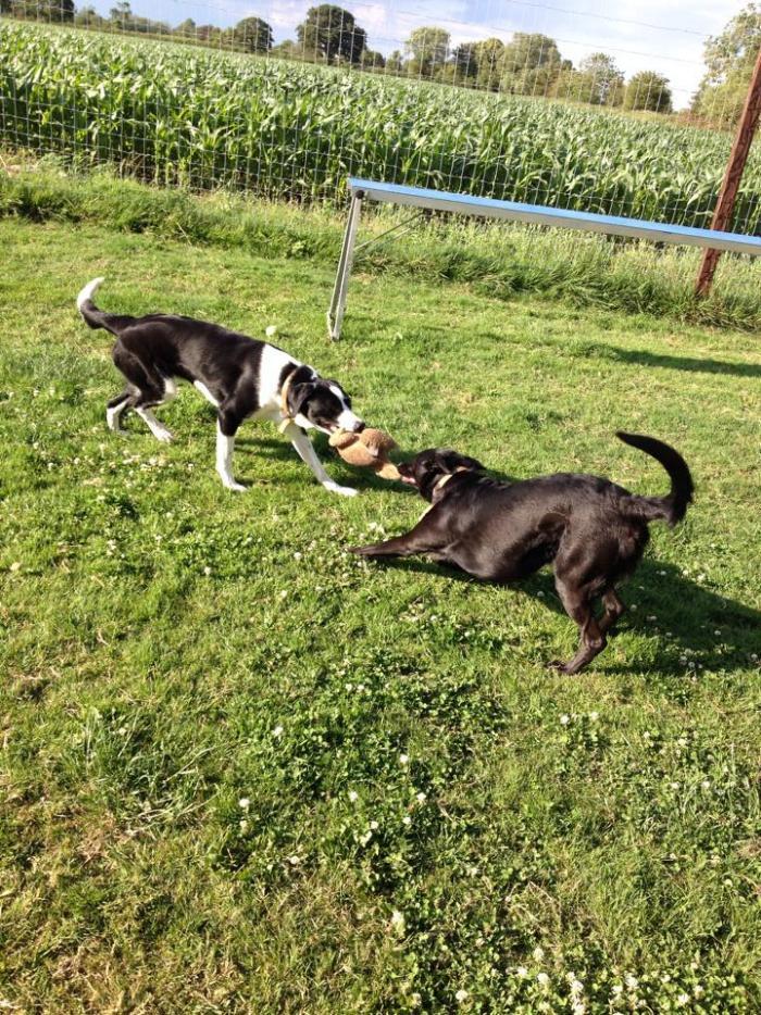 Alfie & Oscar (3)