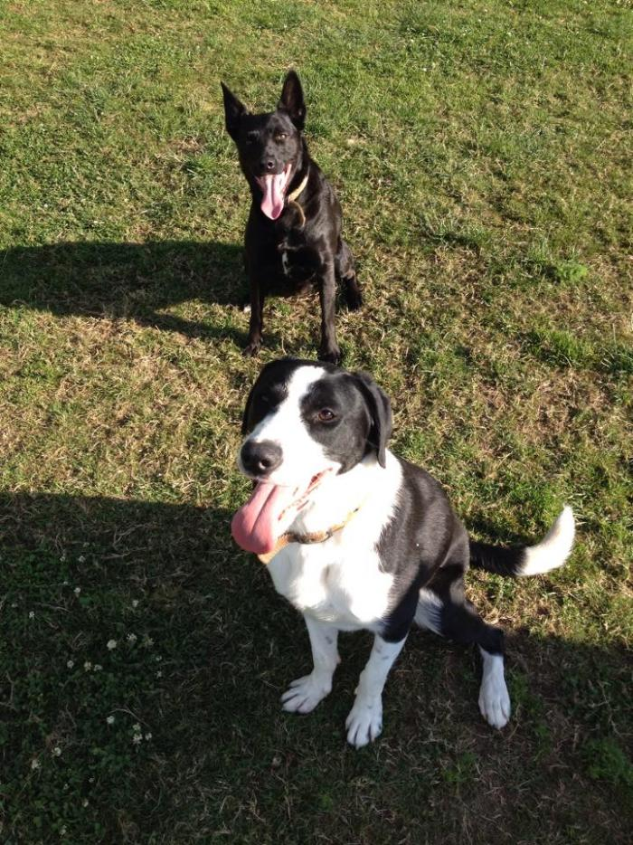 Alfie & Oscar (2)